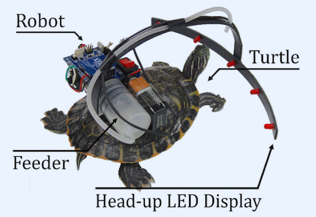 Parasitic Robot Steers Live Turtle With Tasty Snacks